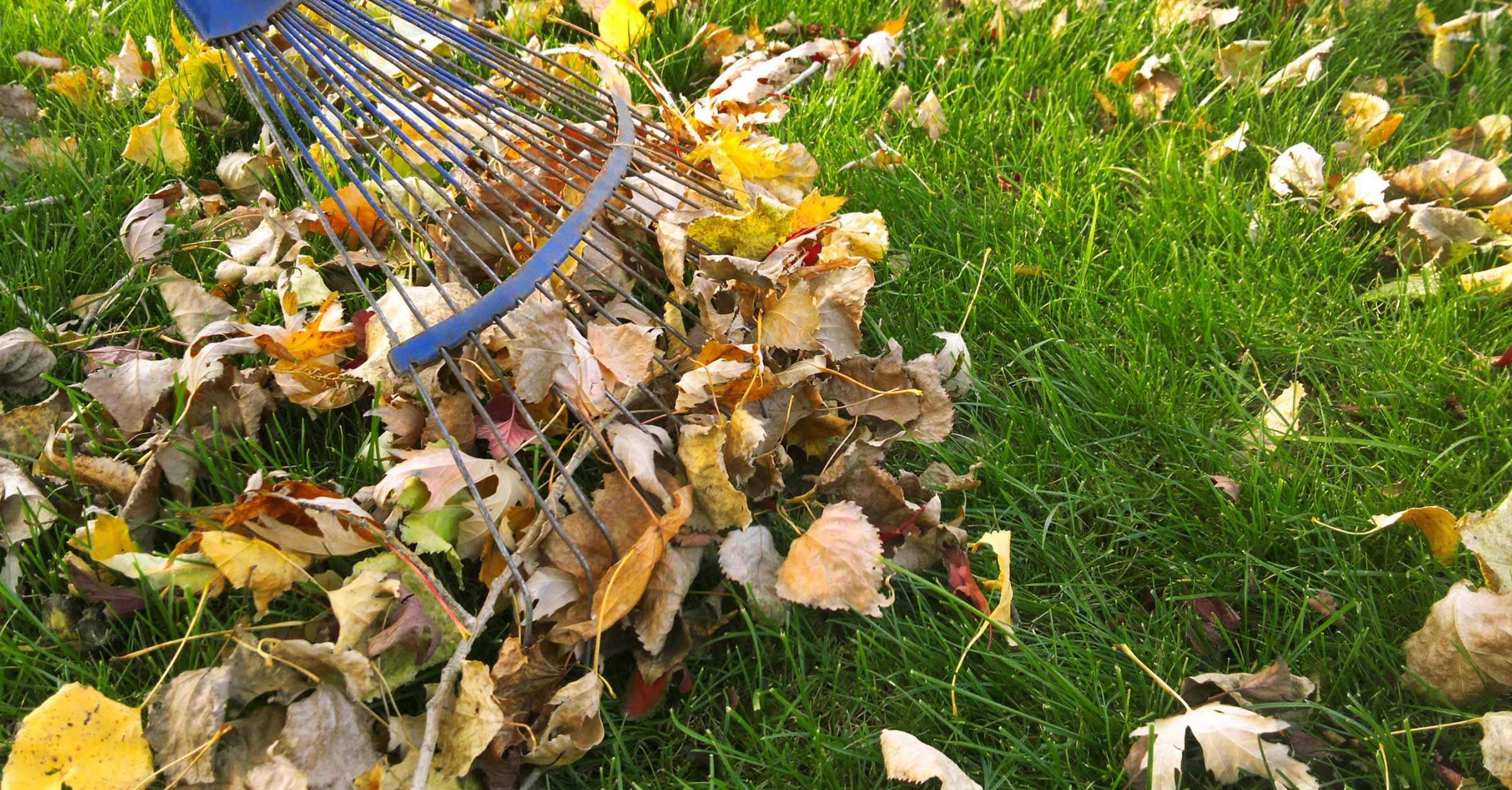 Gartenpflege Laub rechen